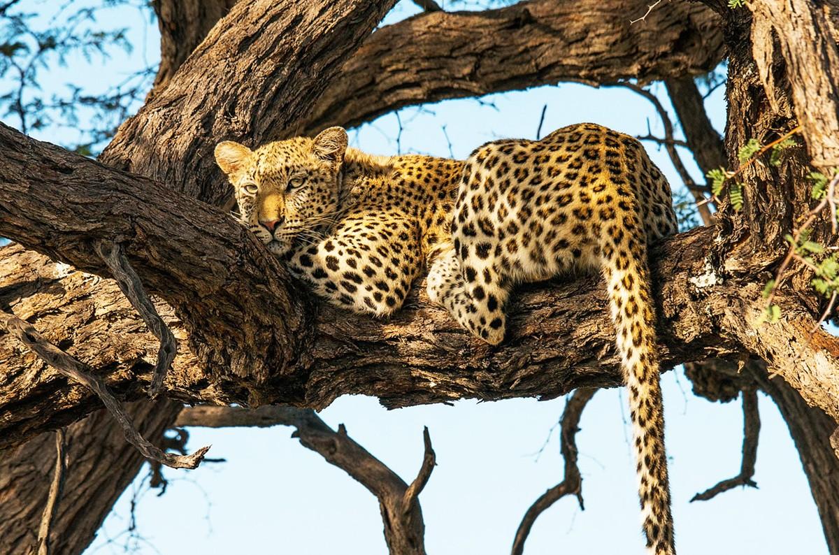 Kunene Tours & Safaris - Home